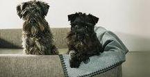 Camas •  Dog Beds / Son muchas las horas que pasan nuestros perros descansando. Les gusta jugar, pero les apasiona dormir. Qué mejor regalo que un buen nido en el que descansar. Todas nuestras camas se construyen con materiales de primera calidad y son totalmente desenfundables. #HANNIKO #HANNIKODESIGN #CamasParaPerros #BedsforDogs #DogBeds #Camas #Beds #LuxuryDog #LuxuryDogBeds
