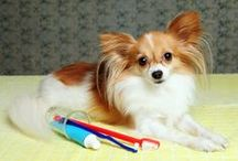 Fido Tips and Tricks / Pawesome advice for caring for your Fido!