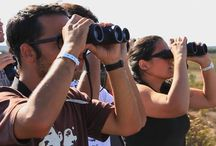 Portugal Events / Aug - Nov Birding Watching Festival