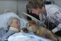 therapy dogs - hospice dogs / by Dawn Thomas