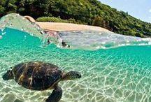 SU Hawaii Trip 2015 / Planning our SU trip in 2015