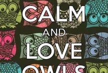 Owl anything