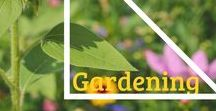 Container Gardening / The best way to contain a garden is in a container. Learn new techniques and plants to use this year in your own pot! #containergarden #garden #potitup!