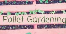 Vertical Gardens / Become a garden guru by taking ordinary objects and turning them into vertical gardens. #verticalgarden #wallgarden #apartmentlife