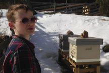 Hyttebiene / Vi har bier på hytta og sommeren 2017 kan du kjøpe rykende fersk honning på Vålerenga kultursenter.