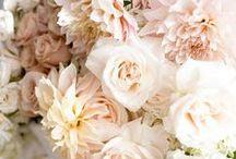Weddings - Blush / by Scenemakers