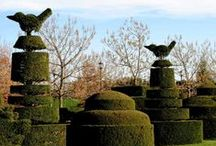 Topiary / by Cindy Hollett
