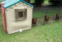 Chickens / Coops, tips, and pics.  / by Freckle Dots (Tammy Lyons)