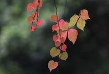 Leaves / by Cindy Hollett