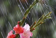 rain , rain ,rain....