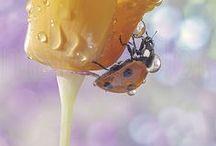 ladybug , snails