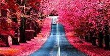 beautiful trees tunel