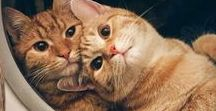Cute cats for sad days / Cats, cats, cats... and kittens...