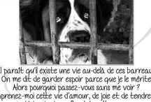 NON à la maltraitance ! ☝️ / Il y a des personnes cruelles qui ne pense qu'a elles, ces personnes là font du mal au animaux. Ils y a d'autres genre de personnes, les personnes qui abandonne leurs animaux pour partir en vacances ou alors parce qu'il en ont marre mais il ne pense pas a ces bête qui ne peuvent rien faire contre  la force humaine . Donc moi je dis les personnes qui font du mal aux animaux QU'ILS CRÈVENT EN ENFER !!