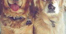 Dogs, Healthy and Happy! / Great pins for information about how to keep dogs happy and healthy.  If you'd like to contribute to this board, message me through Pinterest and I'll be glad to invite you!