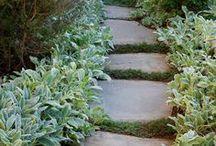 Yard Ideas / Gardening / by Cynthia Belen