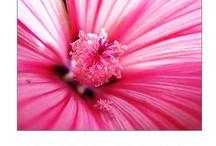 Deanna's Flowers / Flower photography