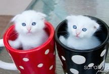 Kitten in a Cup / These are all rescue kittens from OC-ARC