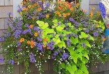 Green Thumb: Gardening Ideas