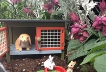 Fairy Garden   / Deb - we have to do this and share ideas!!!  Sooo us!!!