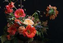 Bri's Shower / rich, fall botanicals.  jewel tones, stone fruits.  sophisticated feminine.  / by Kimberly Brandt