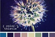 Colour palettes / by Marta Lapkowska