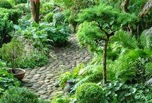 Gardening tips / My hobby......green fingers