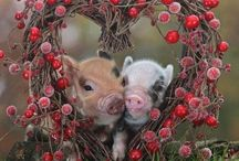 Animals / Love any living creature