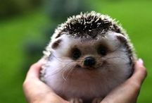 baby animals that are just too cute to not pin / by Olivia Castro