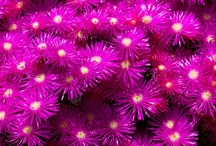 purple flower power