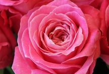 Amazing Blooms / by Jerri Bickerton