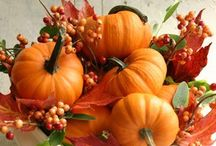 Pumpkin Craze