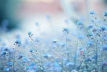 flower / by Eri Takahashi