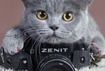 PHOTOGRAPHY / All the fun ideas to play around with your DSLR or camera phone.