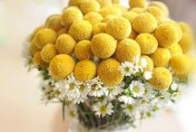 """Billy Button Wedding / Wedding decor featuring the sweet little round flowers known as """"billy buttons"""" or """"billy balls""""."""