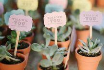 Succulent Wedding / Wedding decor featuring succulent plants.