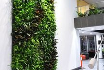 raumbegrünung// space greening / Wir bringen tolle Grüne Wände in ihr Büro mit Hilfe unserer Partner. (Büro Einrichter office-plus) Grüne Wände und ihre Vorteile: Häufig steht nicht genügend Fläche für eine spürbare Innenraumbegrünung zur Verfügung. Mit grünen Wänden können Sie auf wenig Bodenfläche eine sehr angenehme Verbesserung des Raumklima erreichen.