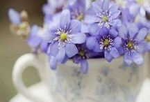 """PURPLE FLOWERS / """"The violets in the mountains have broken the rocks."""" - Tennessee Williams / by Melissa Stephens"""