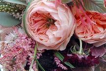 Flowers & Plants / A collection of lovely flora! / by Rebecca Bookwalter