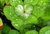 "A LIL' GREEN, A LIL' LUCK / ""For each petal on the shamrock. This brings a wish your way. Good health, good luck, and happiness. For today and every day."" - Irish Blessing   / by Melissa Stephens"