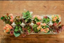 Succulents / by Stephanie Sario