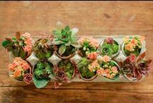Succulents / by Stephanie Sario