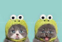 Kittens ❤️