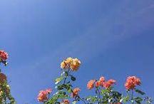 「 ae: flowers 」