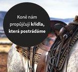 Citíty o koních