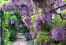 Beautiful Gardens & Flowers / by Julie Abner Stephens