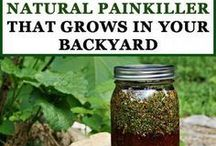Pain Killers in your Kitchen / Natural Pain Relief