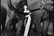 [MODE] Richard Avedon / Photographe de mode et portraitiste américain (1923-2004) il publie dans Harper's Bazaar, Vogue, Life, montre des modèles emplit d'émotions ou en action. Il a également été photo-reporter.  https://www.avedonfoundation.org