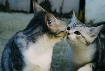 ♥ Love Cats / 猫好きさん、ネコ写真コレクターさん募集中!一緒に楽しいねこたちの写真を集めませんか。参加希望はメッセージを! Let's Pin It together! You'll collect favorite cat. Please add to this board cute cat photo. No spam, No nudity, No advertising! If you would like to be added to this group, please send me an email with your pinterest profile link at : hatamotobiz@gmail.com. Happy Pinning!