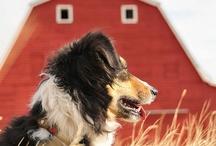 Farmgirl always / by Victoria White